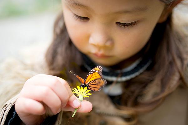 拯救蝴蝶计划